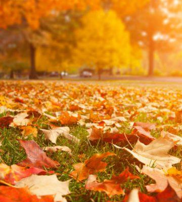 destaque_outono