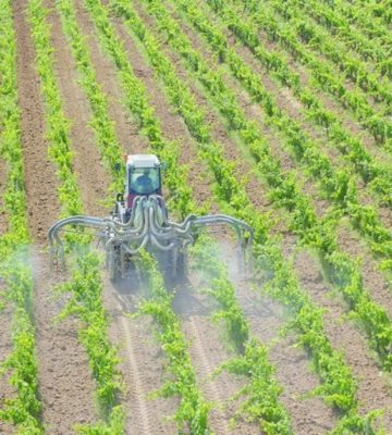 vineyards-pesticides
